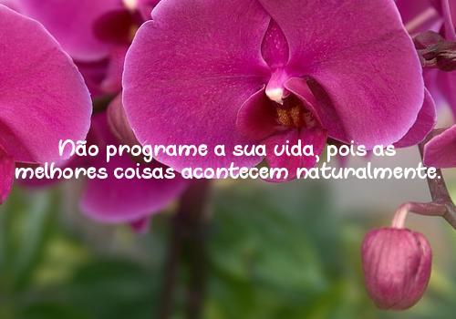 Não programe a sua vida, pois as melhores coisas acontecem naturalmente.